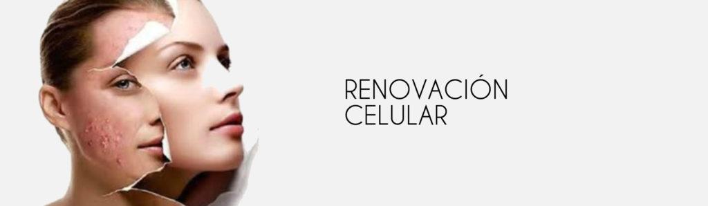 Renovación Celular